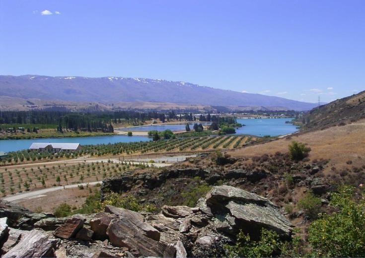 Cromwell basin with the olive grove in the mid ground